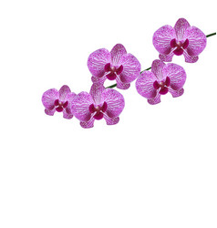 Beautiful purple realistic orchid flowers on a vector