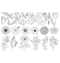 collection set botanical design elements vector image