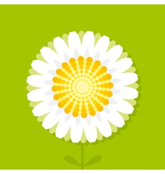 daisy on green background vector image vector image