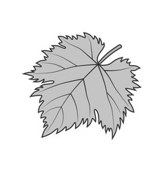 grape leaf gray symbol or vector image
