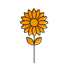 sunflower natural plant vector image