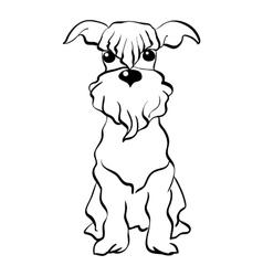 sketch Miniature Schnauzer dog sitting vector image vector image