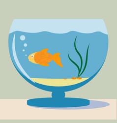 aquarium with golden fish silhouette vector image
