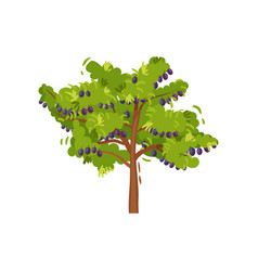 flat icon of big green tree with ripe plums vector image