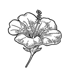 Hibiscus flower black engraving vintage vector