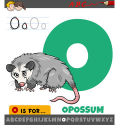Letter o from alphabet with opossum animal vector