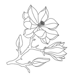 magnolia flower and buds line art perfect for vector image