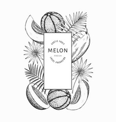 Watermelons melons and tropical leaves design vector