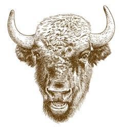 Engraving bison head vector