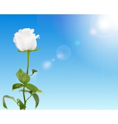 Beautiful Rose Against Shiny Sky vector