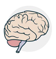 Cartoon brain icon vector