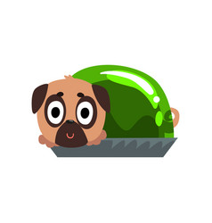 Cute funny pug dog character inside jelly vector