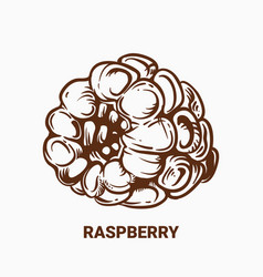 Drawing raspberry hand draw for vector