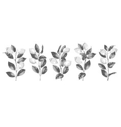 lemon and branches hatching black and white vector image