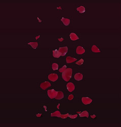 Red rose petals fly down vector