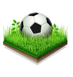 Soccer ball isolated on the Grass Plate Isolated vector image