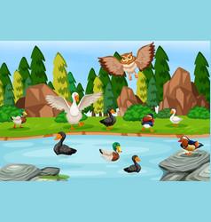 Birds in lake scene vector