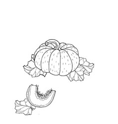 pumpkin drawing vector image