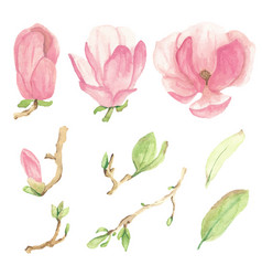 Watercolor pink blooming magnolia flower and vector