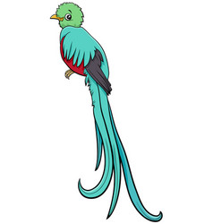 Cartoon quetzal bird comic animal character vector