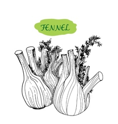 Fennel vector