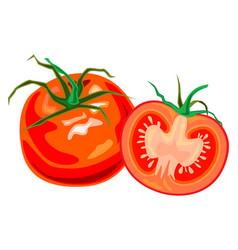 fresh juicy beautiful tomato and vector image