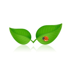 Green leaf with ladybird vector image