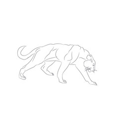 lioness with lines sketch vector image
