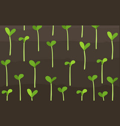 Growing young cereals plant shoots agricultural vector