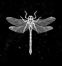 hand drawndragonfly mystic entomological il vector image