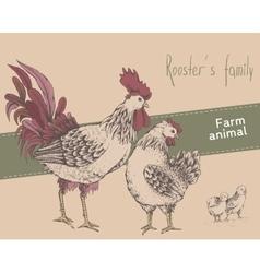 Rooster hen chicken vector