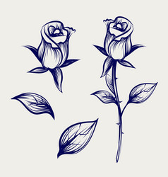 sketch rose flower bud and leaves vector image