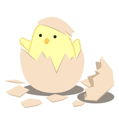 Birth Chick vector