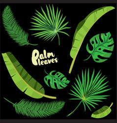 Cartoon tropical palm leaves set vector