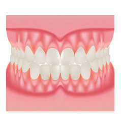 Dentures with white teeth dentition the gums of vector
