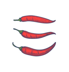 Hand drawn set of chili peppers isolated vector