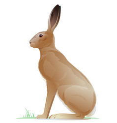 One brown hare vector