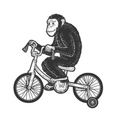 circus chimpanzee rides a bicycle sketch vector image