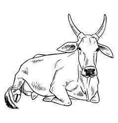 Zebu cow image vector