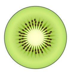 Kiwi fruit isolated on white background vector image vector image
