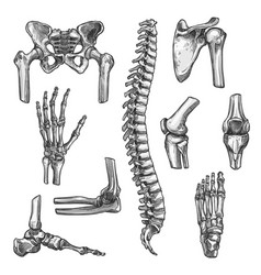 Bone and joint sketches set for medicine design vector