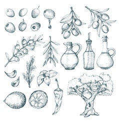 Olive products and supplements sketch vector image