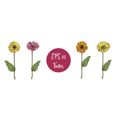 set of beautiful daisy flowers with long stems vector image