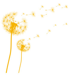 silhouette a dandelion on a white background vector image