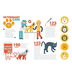 Veterinary care infographic vector image
