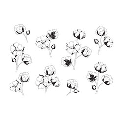 cotton flower set natural material floral vector image vector image