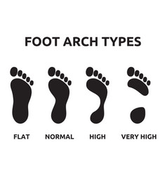 foot arch types vector image vector image