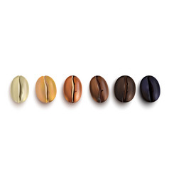 Coffee beans roast stages vector