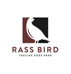 pigeon animal logo design vector image