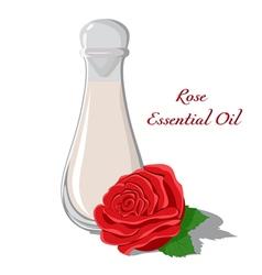 Rose Essential Oil vector image